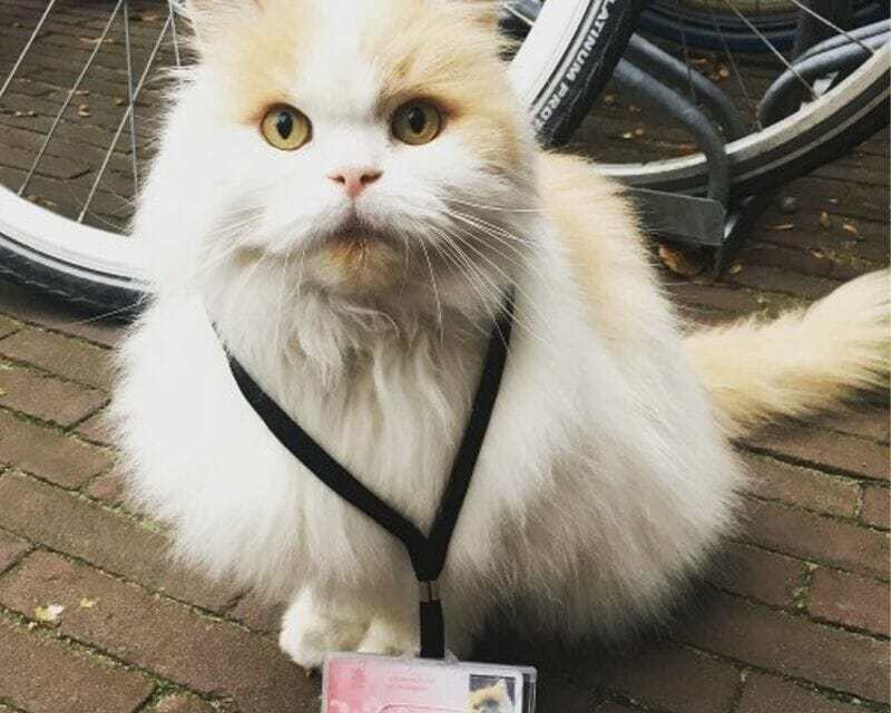 Meet Professor Doerak, the Campus Cat With His Own ID Card