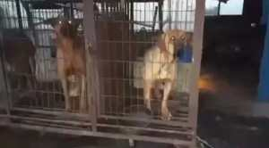 PETITION UPDATE: One Step Closer to Closing Illegal Dog Meat Farms in Ganghwa Island County, S. Korea