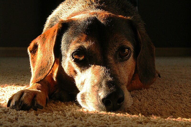 Animal Abuse Link to Domestic Violence Highlighted As Cruelty Cases Rise in Michigan