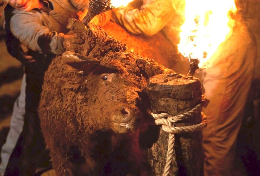 SIGN: Stop Cruel Festivals Where Terrified Bulls Are Tied Up and Set On Fire