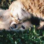 Senate Passes PACT Act to Make Animal Cruelty A Federal Felony