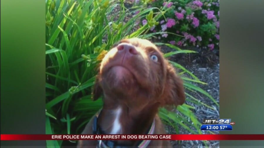 SIGN: Justice for Service Puppy Beaten to Death with Hammer
