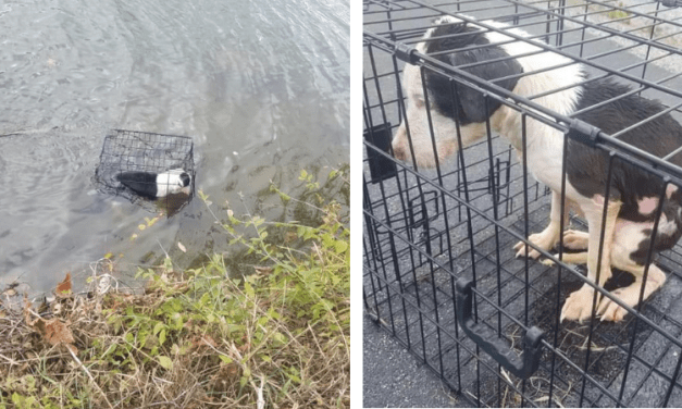 SIGN: Justice for Dog Beaten, Caged and Dumped into Lake to Drown