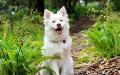 VICTORY! PACT Act Signed Into Law, Making Animal Cruelty a Federal Crime