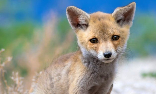SIGN: Ban Deadly Cyanide Bombs That Poison and Kill Innocent Wild Animals and Pets