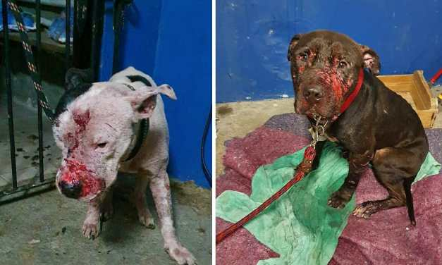 SIGN: Justice for Dogs Forced to Fight to the Death, Then Cooked and Eaten