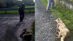 Dog dagged by farmer in Spain