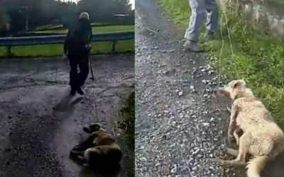 Dog dagged by farmer in Spain