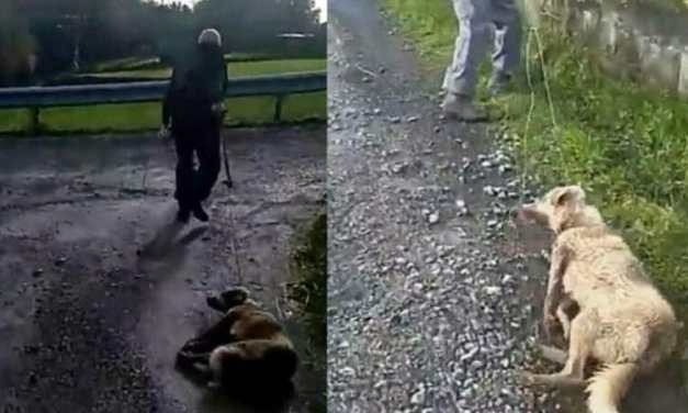 SIGN: Justice for Mother Dog Shot and Dragged with Rope Just After Giving Birth