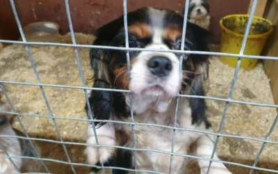 Petition: Justice for 31 Dogs Trapped in Filthy Cages by Cruel Puppy Breeders