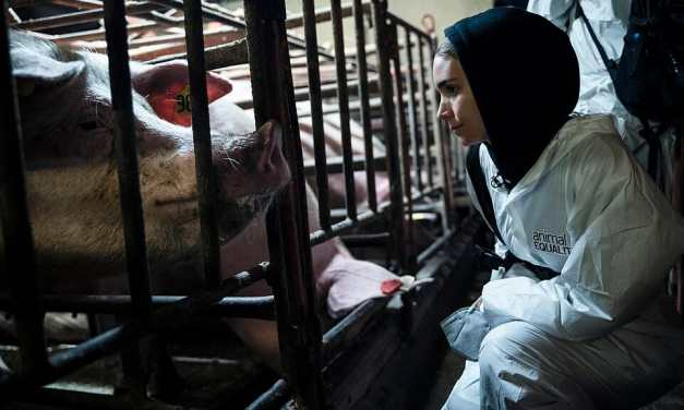 Actress Rooney Mara Goes Undercover to Investigate Cruel Meat Industry