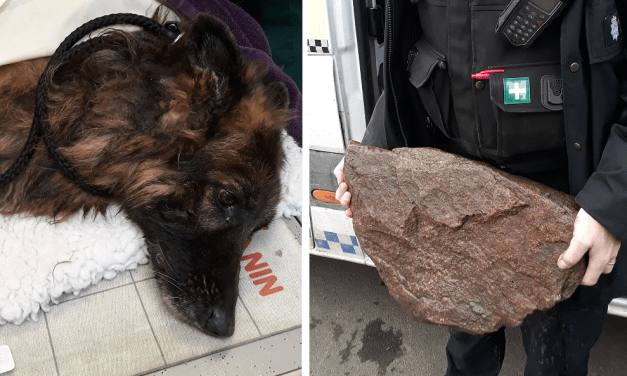 SIGN: Justice for Dog Tied to Rock and Dumped in River to Drown