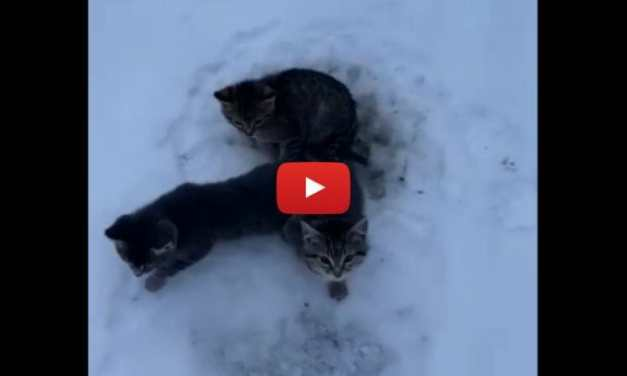 VIDEO: Kind Man Uses Coffee to Free 3 Kittens Frozen to the Ground
