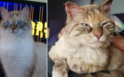 Cat before and after fire