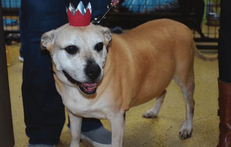 Charming Rescue Dog Finds Forever Home After Six Years At The Shelter