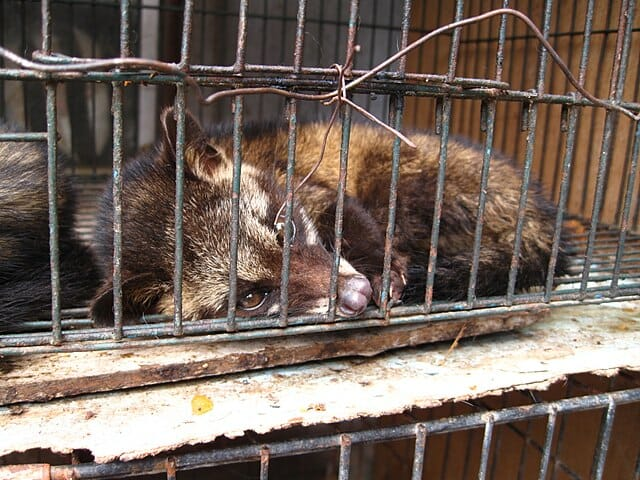 SIGN: End The Sickening Wild Animal Trade in China