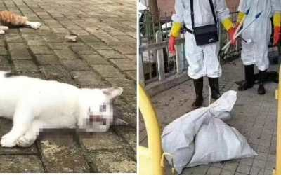 wuhan animals killed