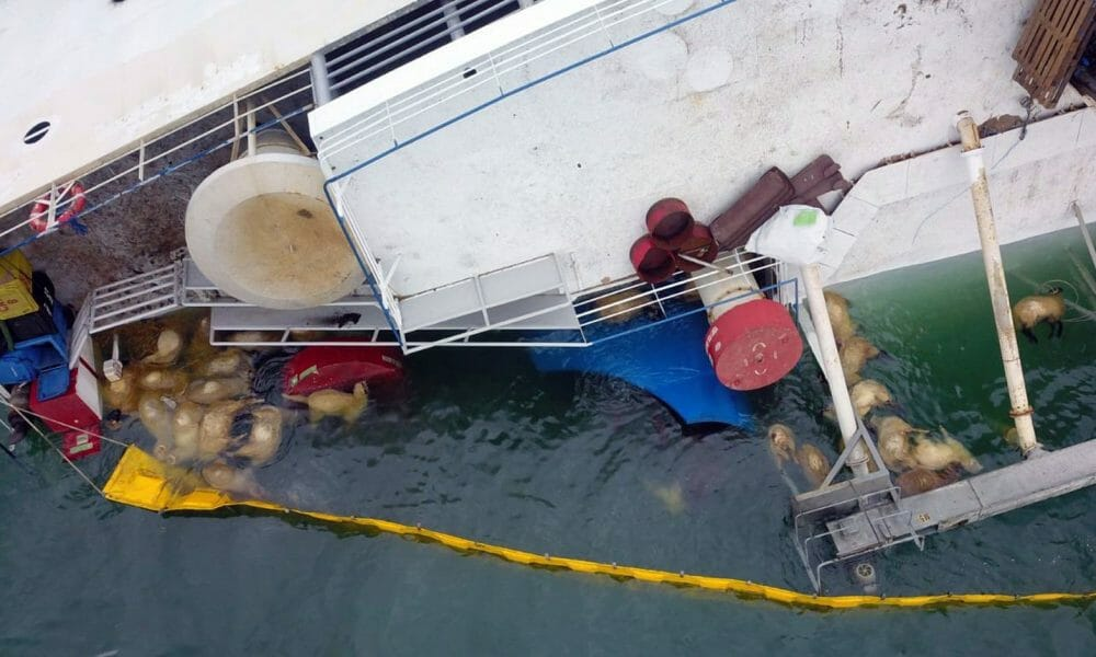 Secret Decks May Have Capsized Livestock Ship that Drowned Thousands of Sheep