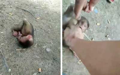 baby monkey video