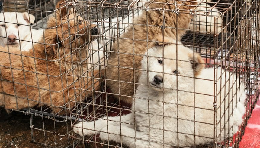 UPDATE: Dog and Cat Meat Are Now Banned in Shenzhen, China