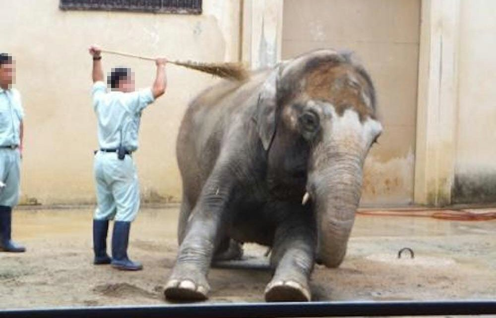 SIGN: Free Himeko the Elephant from Solitary Confinement