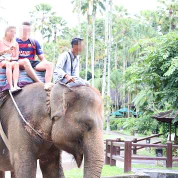 Riding Elephant with Bullhook At Head
