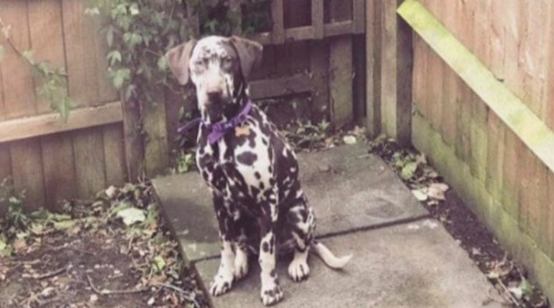 SIGN: Justice for Therapy Dog Stolen from Girl with Autism and Found Dead