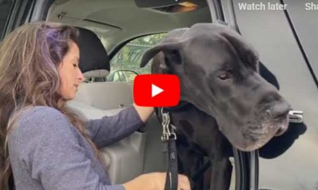 VIDEO: This Therapy Dog Is Cheering Up Nursing Home Residents During Troubling Times