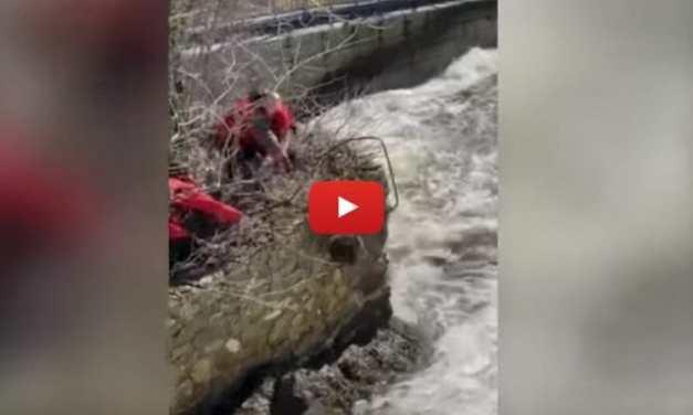 VIDEO: Beaver Stranded on Ledge Saved from Raging River
