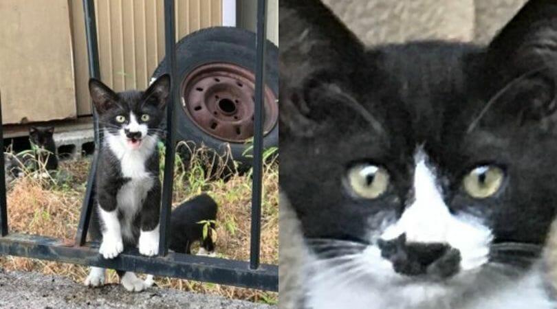 Kitten's Unusual Marking Is Almost Too Cute to Be True