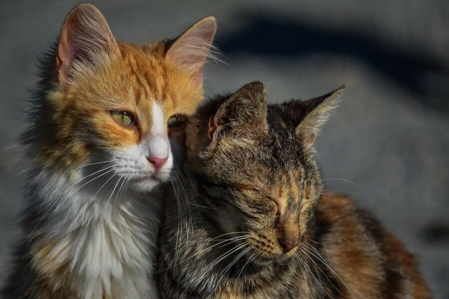 Iowa Senate Approves Bill to Make Repeated Animal Cruelty A Felony
