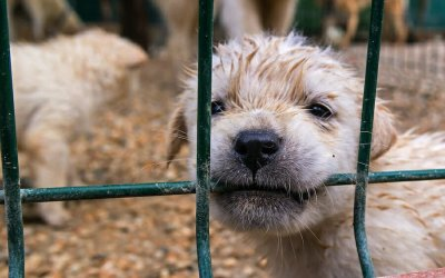 SIGN: Help Puppy Mill Dogs Trapped and Alone in Coronavirus Crisis