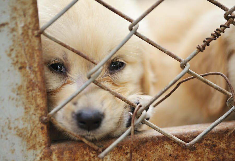 SIGN: End All Puppy Mills in the US
