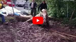 emergency workers rescuing horse from mud pit