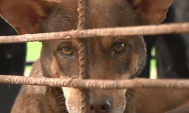 Dog and Cat Meat Sales Spike in Vietnam and Cambodia Amid Pandemic