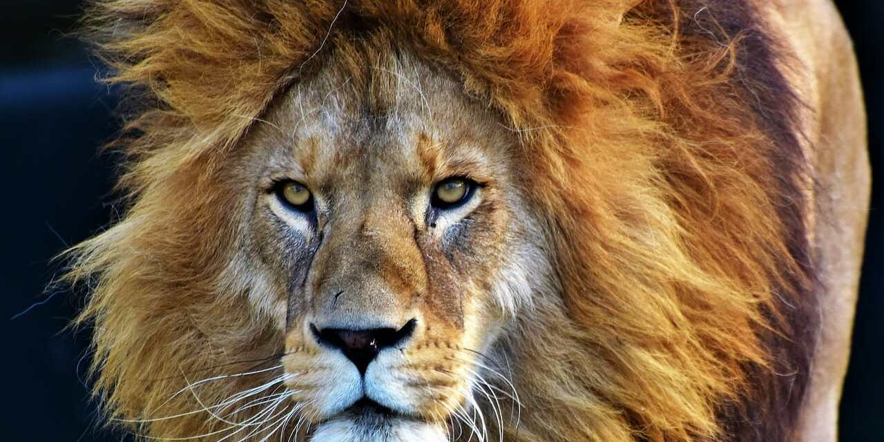 Pro-Trophy Hunting Lawyer Appointed Key Role at US Fish and Wildlife Service