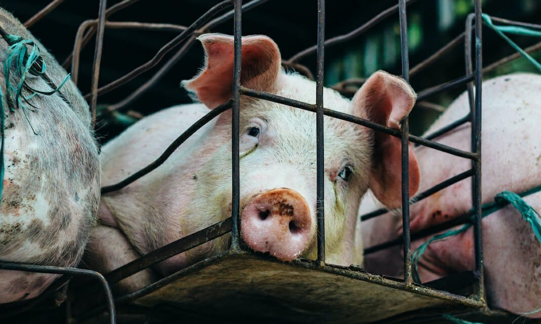 SIGN: End Cruel and Deadly Factory Farming in the United States