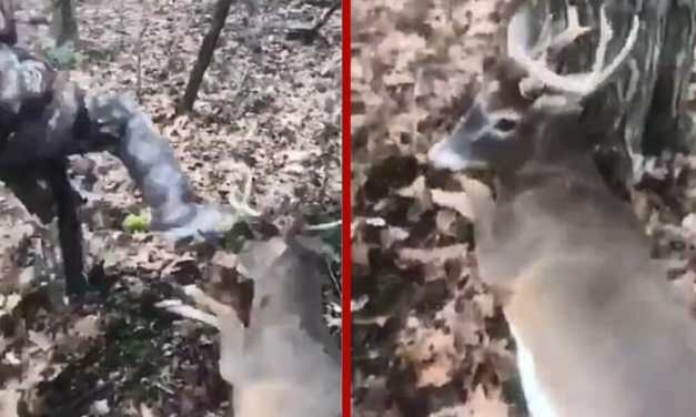 UPDATE: Man Who Tortured Dying Deer Gets No Jail Time