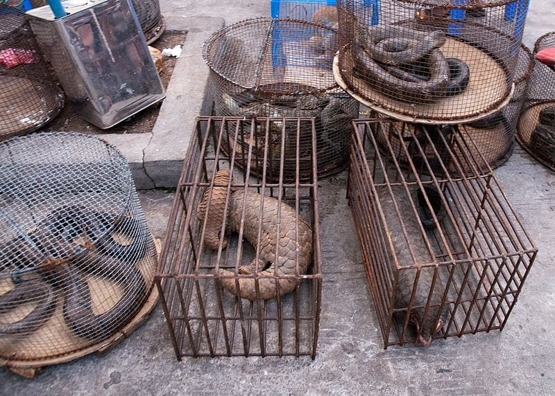 Wuhan Has Officially Banned Eating Wild Animals