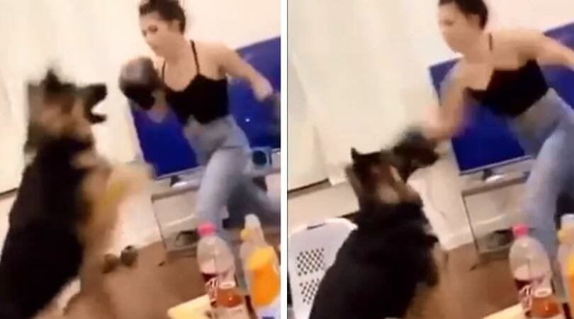 SIGN: Justice for Dog Repeatedly Punched in Face in Viral 'Boxing' Video