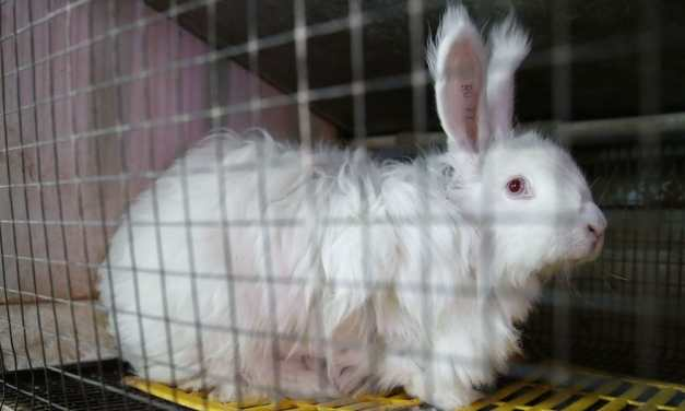 SIGN: Stop Bunny Torture and All Animal Cruelty at TJ Maxx