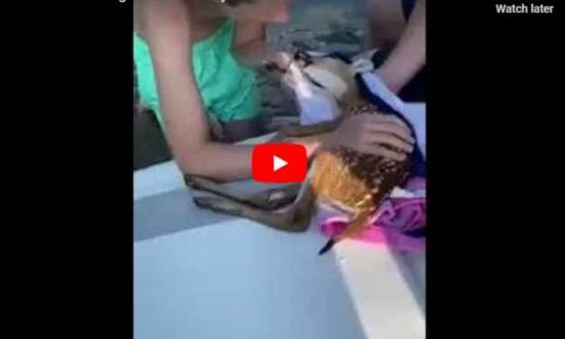 VIDEO: Heroes Spring Into Action to Save Drowning Baby Deer with CPR