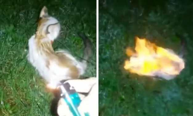 SIGN: Justice for Kitten Burned as 'Living Torch' in Viral Video