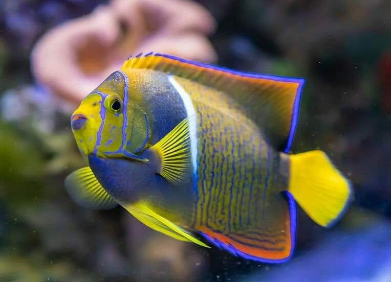 First Ever 'Respect for Fish Day' Wants to Change How the World Sees Fish