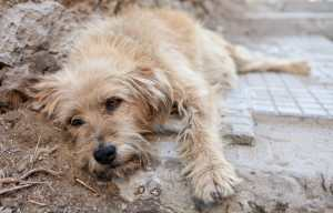 SIGN: Justice for 24 Dogs Massacred at Tunisian Animal Shelter