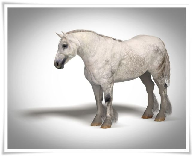 Dapple grey drat horse texture and morph for the MilHorse