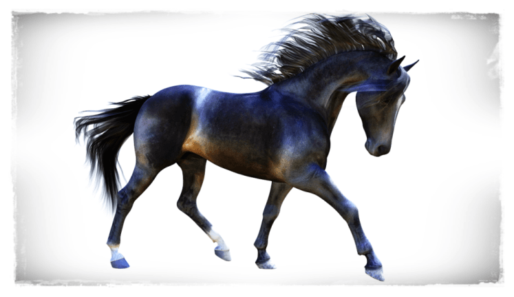 Texture & morph based on real horse