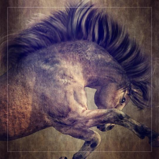 Millennium Horse Native Pony Character, texture and full body morph FBM