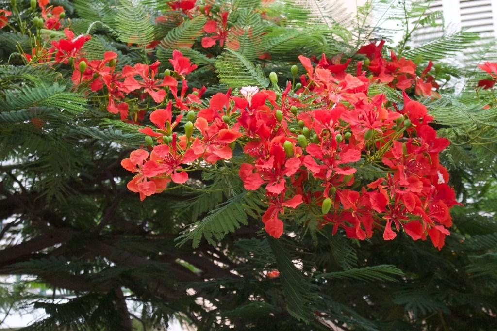 alt-fleurs-ile-sao-vicente-cap-vert