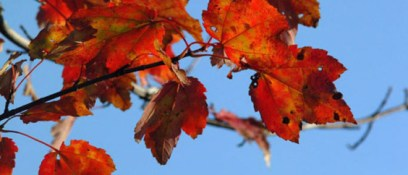 natuur_herfstbladeren